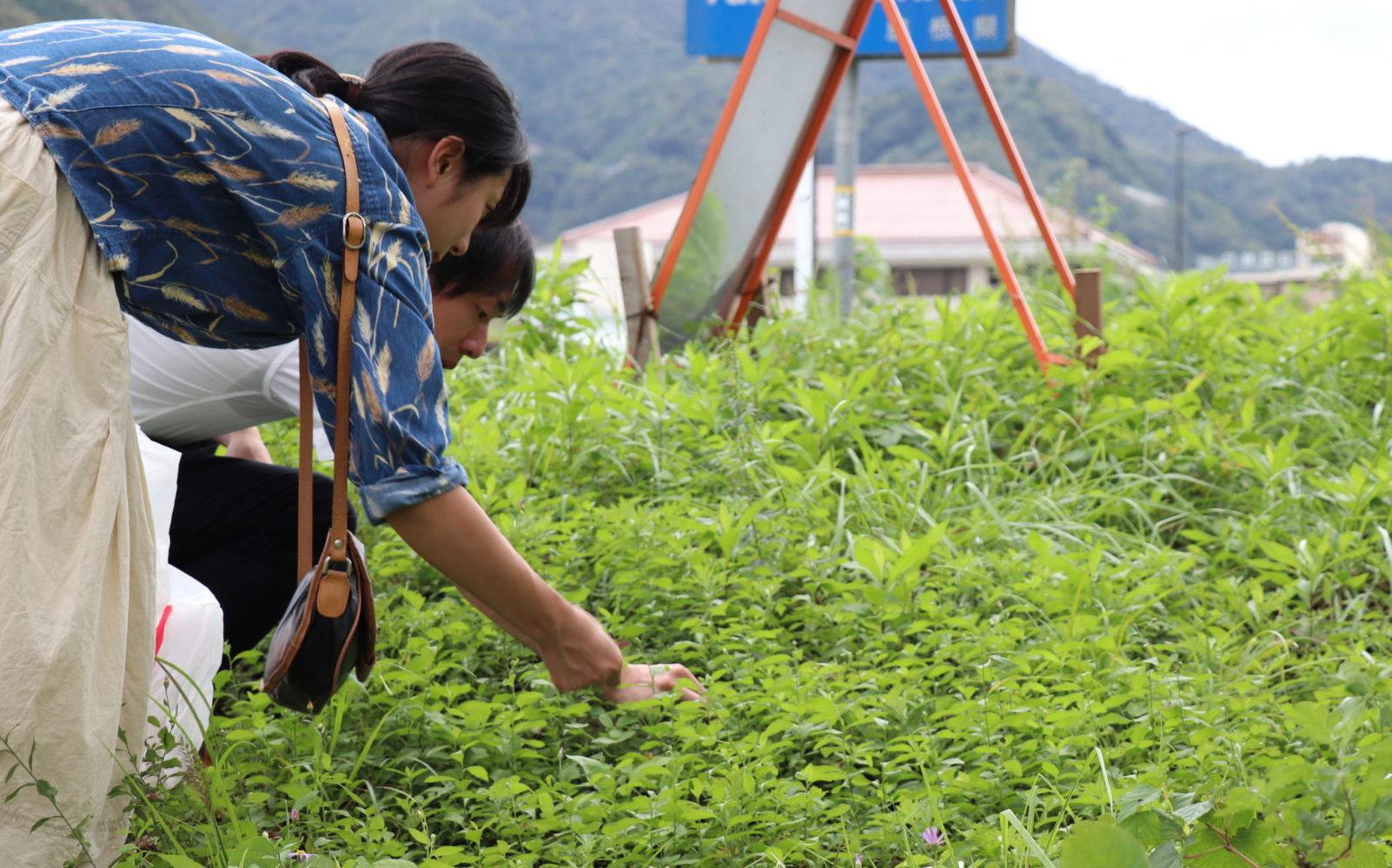 たわむれの雑草学|第2期